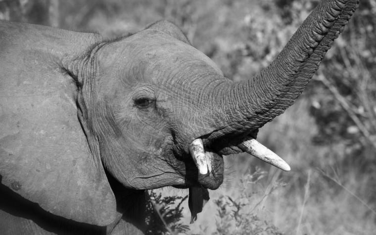 baby elephant wp