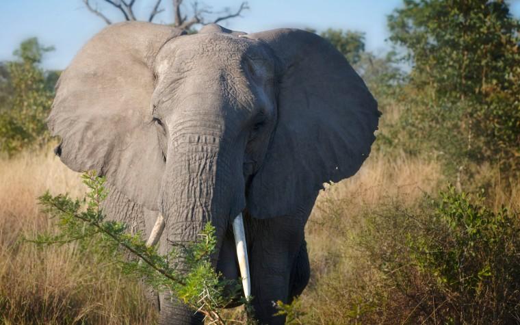 mom elephant wp